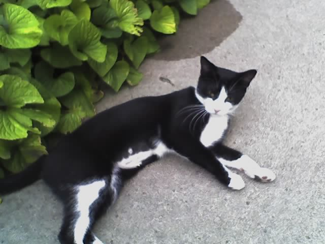 Lost Cat Recursion By Luke Francl